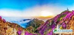 大黑山,站在云端有杜鹃相伴