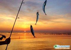 金光海色――大连海洋岛夕阳图片