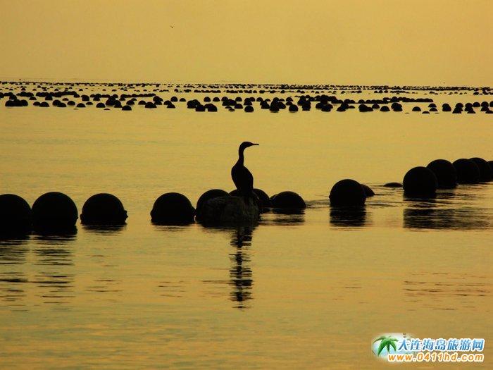 金光海色――大连海洋岛夕阳图片2