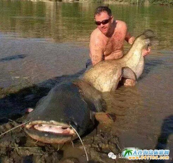 巨型食人鱼2_世界十大垂钓者之最,震撼至极的垂钓之旅