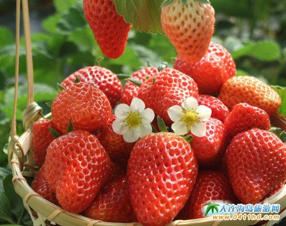 大连好吃的草莓园子