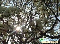 春天大连旅游赏花攻略