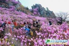 春天到大连高山赏花美丽无限