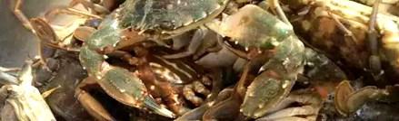 哈仙岛渔家美食