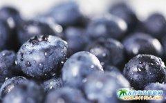 蓝莓的食用价值