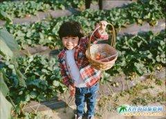 大连春日踏青去哪里好玩 大连金州草莓+温泉一日游