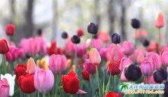 4月22日旅顺英歌石植物园直通车正式发车丨英歌石花已开