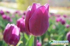 英歌石植物园直通车天天发车丨五一相约百花盛开植物园