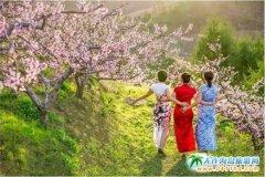 在那桃花盛开的地方丨领略丹东旅游美景