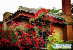 旅顺太阳沟,赏完樱花看蔷薇花丨旅顺一日游