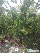 大连旅顺农家院,弘�壹彝ヅ┏�,旅顺蔬菜水果采摘园农场