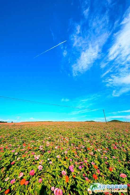石城岛,用花的汪洋惊艳了海的世界