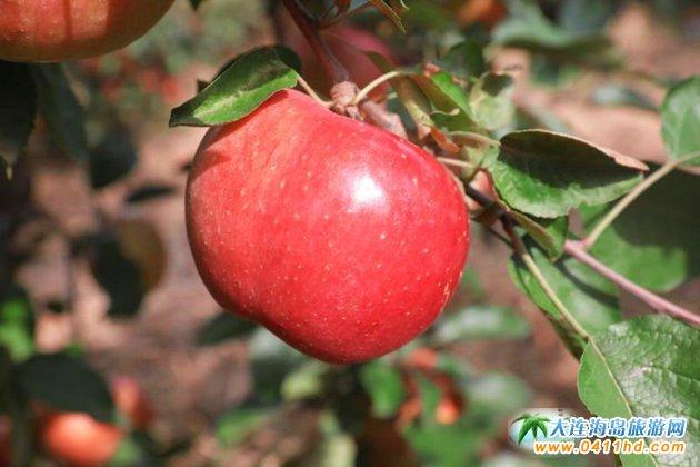 大连苹果园