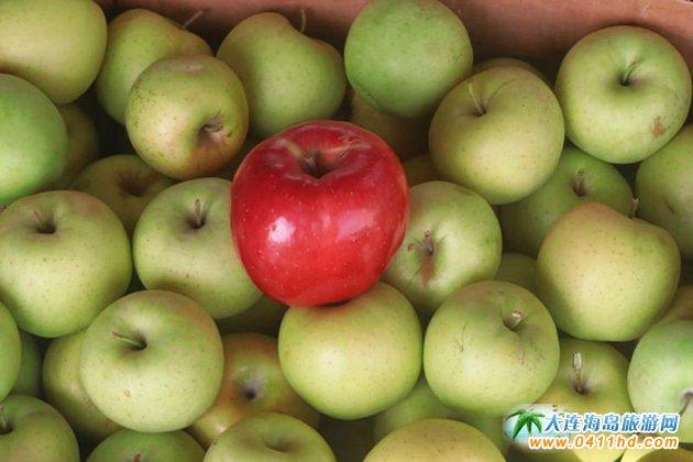 旅顺苹果采摘园,旅顺弘�移还�园图片11