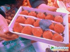 隆冬已至!我仿佛又闻到了草莓的香甜!