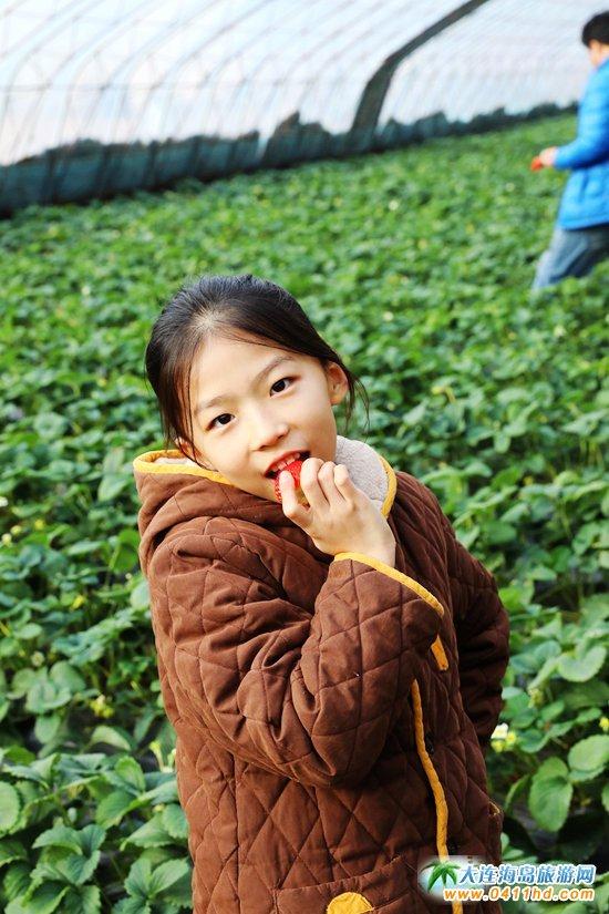 大连草莓采摘