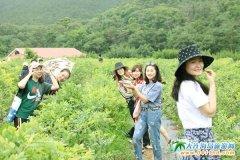十二家金普蓝莓园为大连蓝莓采摘季助兴