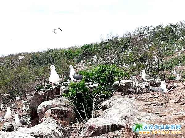 广鹿岛鸟岛