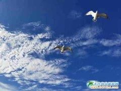 大连秋季旅游好去处,海王九岛景美、海鲜肥
