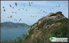 长海县树木丰茂 鸟语花香 国际生态岛建设高质量发展