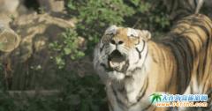 大连森林动物园超全游玩攻略