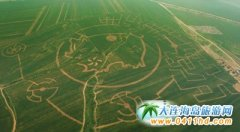 大连玉米迷宫